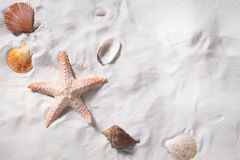 Topview of sea shells with sand beach as background and copyspace. Stock Photo