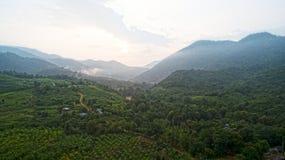 Topview selvagem Foto de Stock