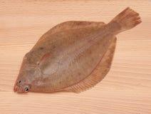 Peixes da solha fotografia de stock