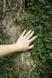 Toque a uma árvore Fotos de Stock