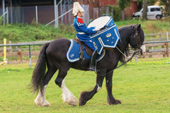 Tor the Drumhorse passing by at the arena at the The Mounted Guard event Stock Photography