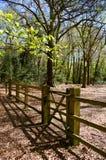Tor und Zaun in der Waldeinstellung Stockfotos