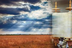 Torah scroll during the holy day Wheat field, wheat background of Shavuot stock photos
