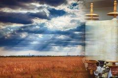 Torah snirkel under vetefältet för helig dag, vetebakgrund av Shavuot arkivfoton
