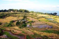 Toraja land Royalty Free Stock Photo