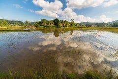 Toraja landscape, rice paddies Royalty Free Stock Photo
