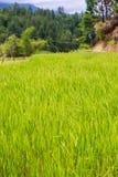 Toraja landskap Royaltyfria Bilder