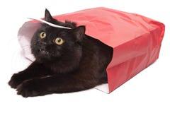 torba czarnego kota odosobniona czerwień Zdjęcie Royalty Free