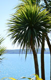 Torbay棕榈 库存图片