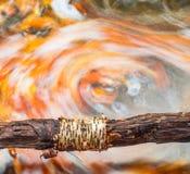 Torbellino colorido en caída Fotografía de archivo libre de regalías