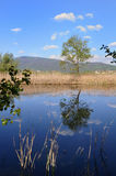Torbiere del Sebino peat bog early in the morning stock photography