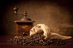 torby fasoli coffe ostrzarza juta Zdjęcie Royalty Free