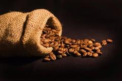 torby fasoli kawa świeża Zdjęcia Stock