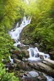 Torc Waterfall. Killarney National Park, County Kerry, Ireland Royalty Free Stock Image
