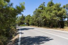 Torcendo a estrada rodoviária asfaltada entre os pinhos Fotos de Stock