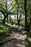 Torcendo percorso attraverso il legno Fotografia Stock