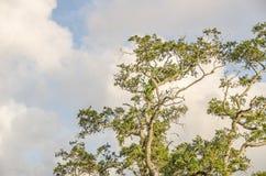 Torcendo ramos Fotos de Stock Royalty Free
