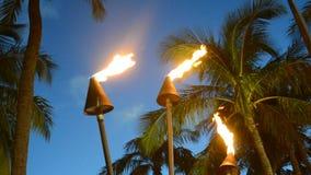 Torches d'Hawaï banque de vidéos