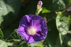 Torcia elettrica del fiore Fotografie Stock Libere da Diritti