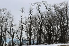 Torcido y curvando árboles Fotografía de archivo libre de regalías