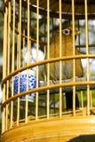 Tordo de madeira Imagens de Stock Royalty Free