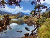 Toreadora sjö och pappers- träd på nationalparken El Cajas, Ecuador royaltyfria bilder