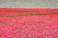 Toren van Londen met overzees van Rode Papavers om de gevallen militairen van WWI - 30 Augustus 2014 te herinneren - Londen, het  Royalty-vrije Stock Afbeeldingen