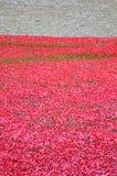 Toren van Londen met overzees van Rode Papavers om de gevallen militairen van WWI - 30 Augustus 2014 te herinneren - Londen, het  Stock Fotografie