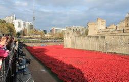 Toren van Londen met Papavers Stock Foto's