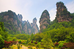Torenhoge steenpieken in Zhangjiajie, China Stock Fotografie