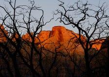 Torens van Virgin, Zion National Park royalty-vrije stock afbeeldingen