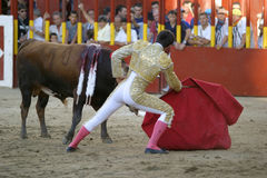 Torero and bull. Torero in action Stock Photography