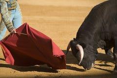 Torero con il capo nella corrida fotografia stock