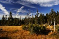 Torf-Sumpf in den riesigen Bergen Stockfoto
