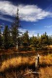 Torf-Sumpf in den riesigen Bergen Stockbild