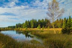 Torfmoor Zdjęcie Stock