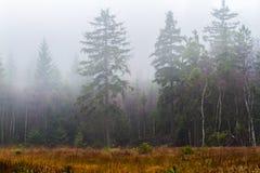 Torfmoor images libres de droits