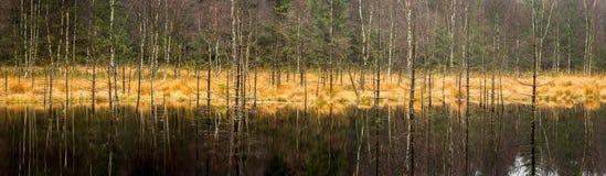 Torfmoor Obrazy Stock
