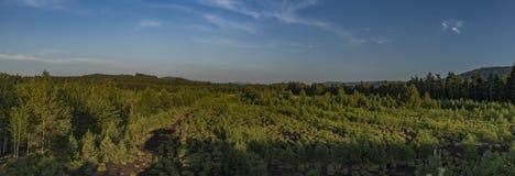 Torfowiskowy bagno blisko Soumarsky Najwięcej wioski zdjęcie royalty free