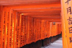 Tori Series in Fushimi Inari Stock Images