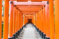 torii красного цвета стробирует дорожку на святыне taisha inari fushimi в Ky Стоковое фото RF