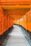 torii красного цвета стробирует дорожку на святыне taisha inari fushimi в Ky Стоковые Изображения RF