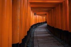 Torii красного цвета стробирует путь дорожки на святыне taisha inari fushimi Стоковые Изображения