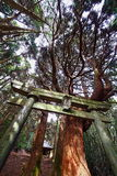 Torii and the big tree of the shrine Royalty Free Stock Photo