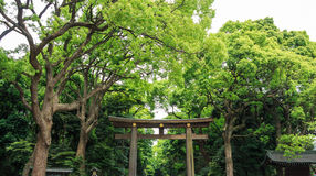 Torii (Entrance gate) and tree in temple area ,Japan Stock Photo