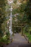 Torii gate along forest paved walkway, Nobeoka, Japan royalty free stock photos