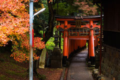 Torii gate at autumn in Fushimi Inari, Kyoto Royalty Free Stock Images