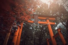 Torii gate of Chureito Pagoda in the spring on daytime in Fujiyo stock images