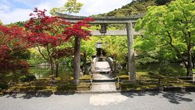 Torii Gate in Eikando. Red linden trees surround Torii gate Hengaku leading to the Benzaiten shrine in Eikan-do Zenrin-ji temple in Kyoto, Japan. Zenrin-ji is stock video footage