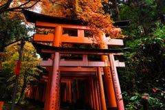 torii gate with fall colors at Fushimi Inari, Kyoto Royalty Free Stock Image